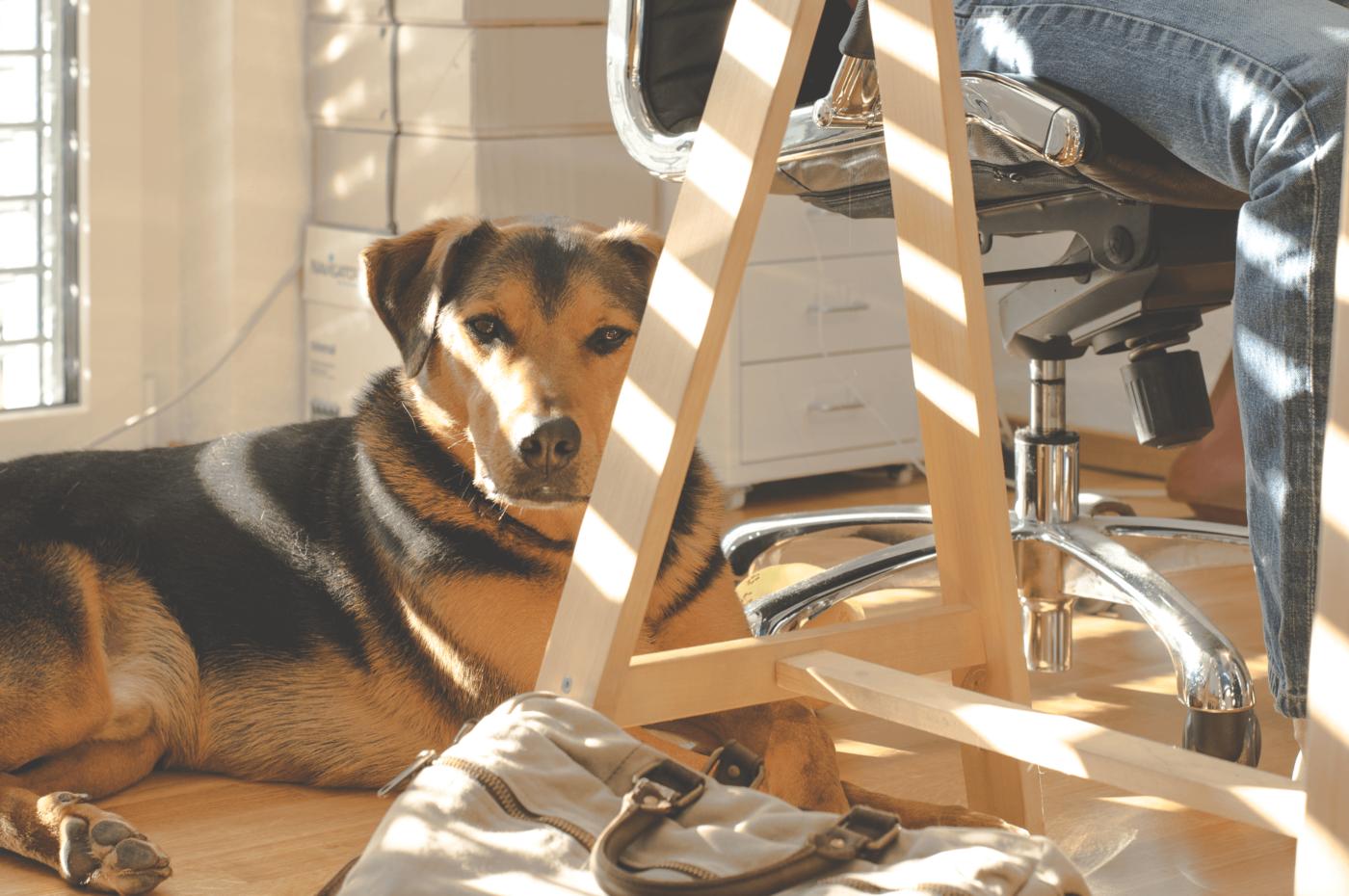 pet-at-work-1